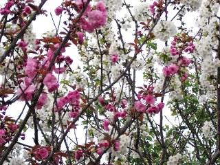 春の花の時期も終演